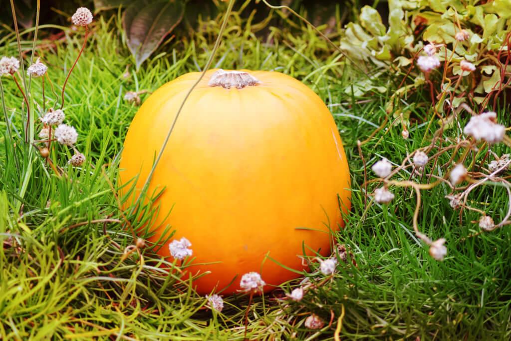7 rzeczy, o których warto pomyśleć jesienią
